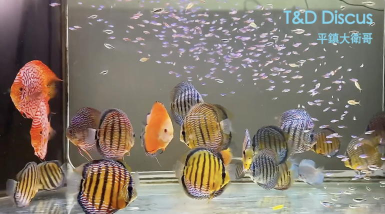 David's Wild Discus & Colorful Fish Tank Part I