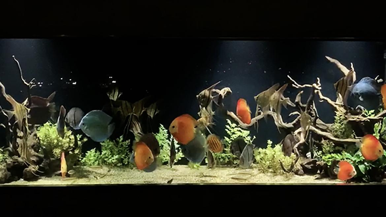 小馬哥的回饋分享 – 8 呎水草造景缸