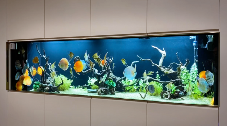 Mr. Ma who lives in Taipei, whose 8-foot wide tank with aquatic scene