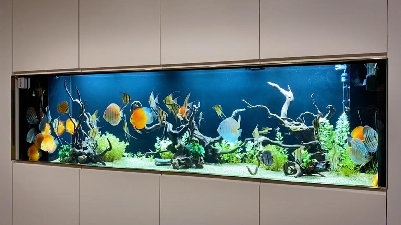 台北小馬哥的 8 呎水草造景缸