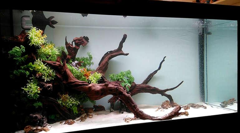 新店李大哥的 5 呎 8 野彩生態系統缸