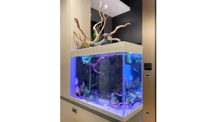 新莊董ㄟ的玄關七彩造景缸:七彩試水魚