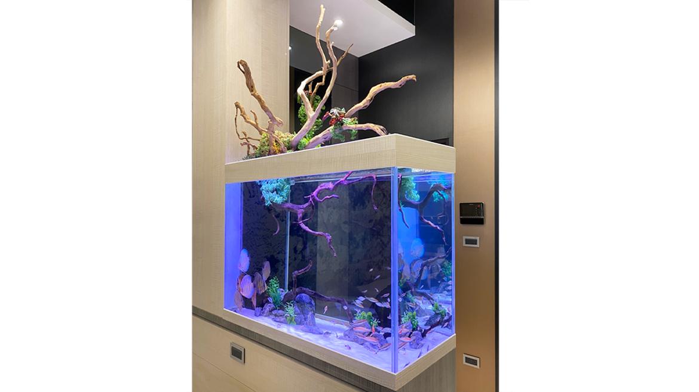 (繁體中文) 新莊董ㄟ的玄關七彩造景缸:七彩試水魚