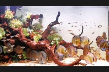 李大哥 5 呎 8 野彩生態系統缸:40 隻野彩