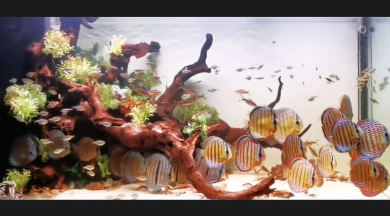 (繁體中文) 李大哥 5 呎 8 野彩生態系統缸:40 隻野彩