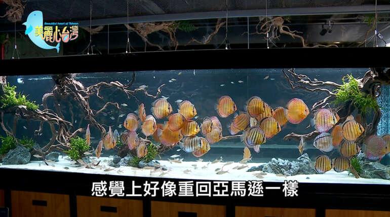 「美麗心台灣・令人驚豔的野生七彩」專訪