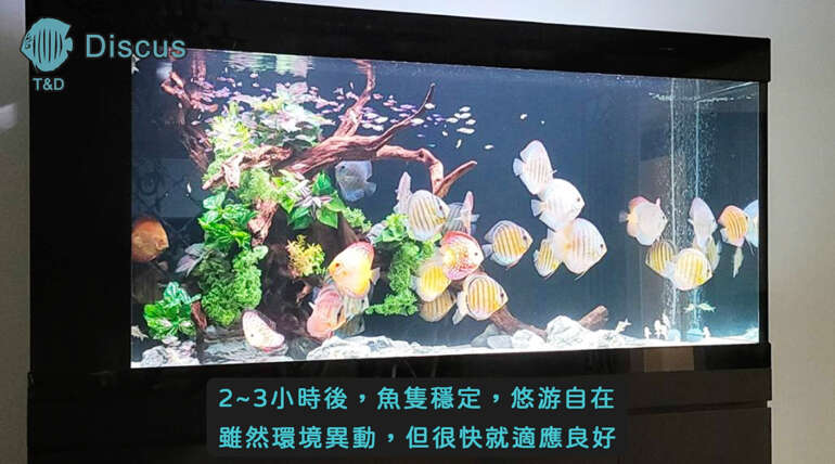 (繁體中文) 桃園陳大哥五呎八七彩造景缸 Part 1
