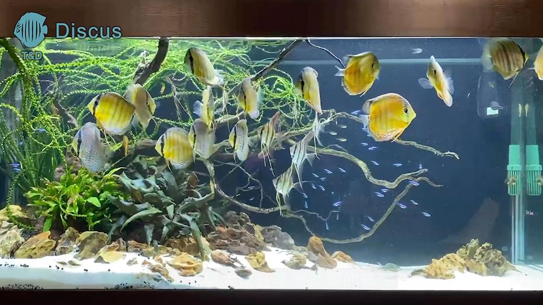 (繁體中文) 4 呎 2 野彩水草缸