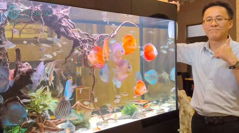(繁體中文) 楊梅唯帆小老弟 4.2 呎七彩生態缸「得獎感言」