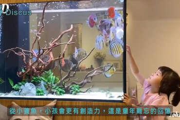(繁體中文) 土城 Johnson 104cm 七彩生態系統缸